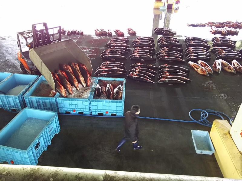 本で13しかない特定第三種漁港、気仙沼港。【下】カツオと並んでサメの水揚げも日本一だ。やはり気仙沼といえば水産。しかし、その確立された「ブランドイメージ」が、かえって産業多角化を図ろうとする際の足かせになることもあるという。