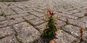 block paving weeds