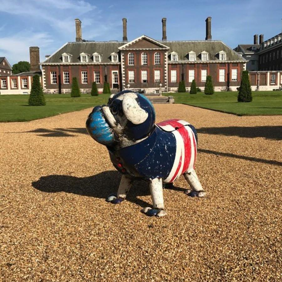 Winston The Bull Dog