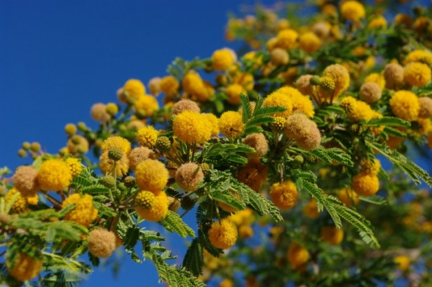 An unknown flowering tree.