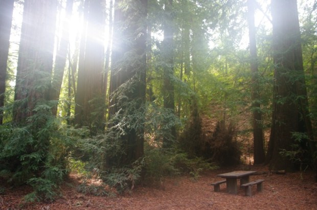Camping under the redwoods at Pfeiffer-Big Sur State Park.