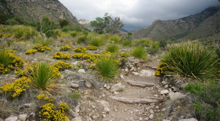 A Perfect Day in Guadalupe Mountains National Park