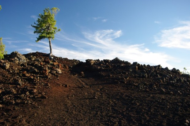 It can take thousands of years for plants to start growing on the lava.