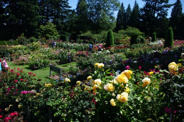 Just a small section of the Rose Garden.
