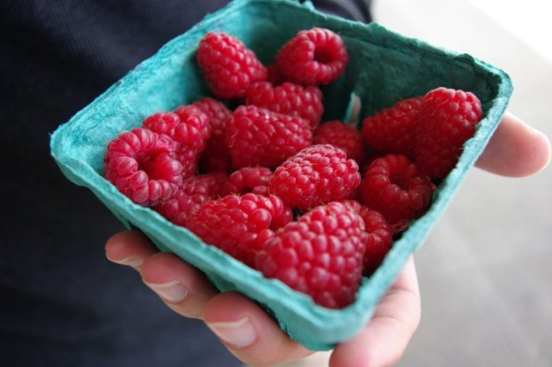 Raspberries...gone in 60 seconds.