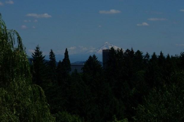 Mt. Hood from the Rose Garden.