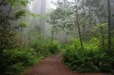Trail through the fog.
