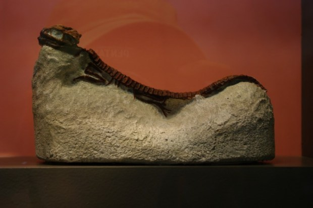 My favorite relic: the chaise-lounging crocodile.
