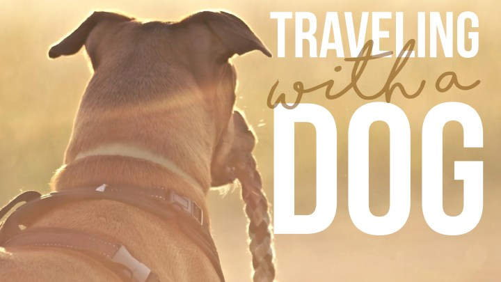 Q&A – Traveling with a Dog – Fulltime RV Living