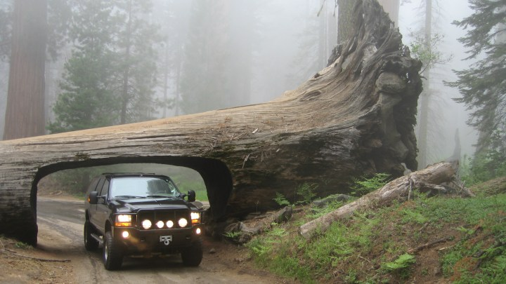 Sequoia National Park for RV Owners | Essential Summer Camping Guide