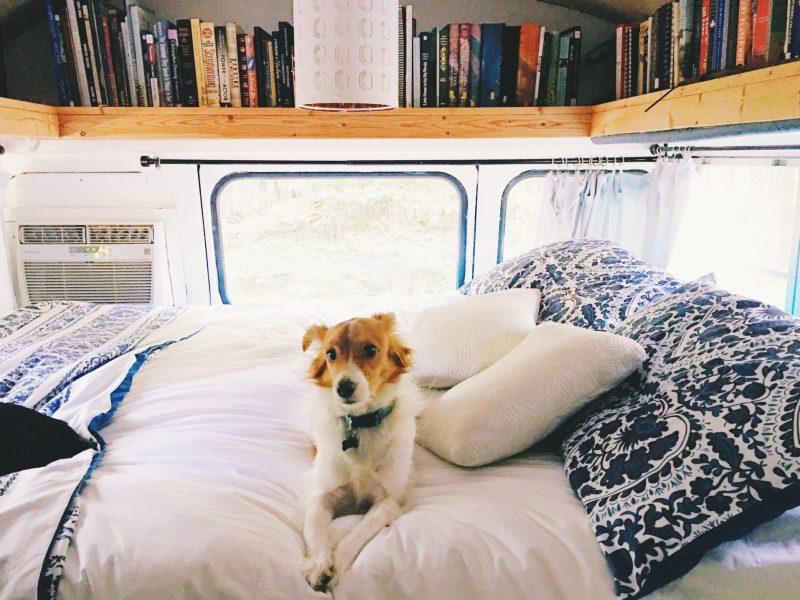 dog in camper van bed