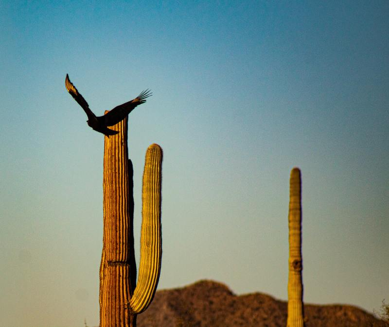 One of the best ways to experience all that Organ Pipe Cactus National Monument offers is to take a scenic drive.
