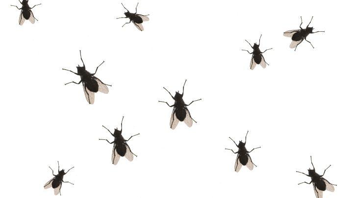 How to Get Rid of RV Bathroom Flies