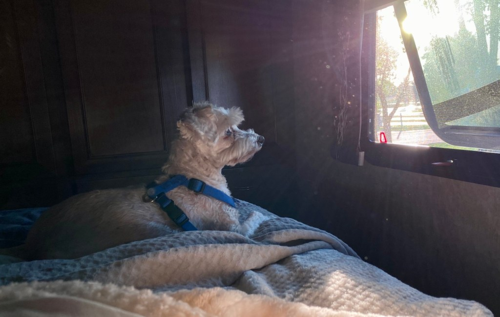 Dog sitting in RV bed next to cracked window.