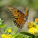 butterfly-photo130