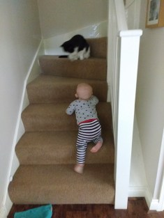 Zooming up the stairs after Lyra