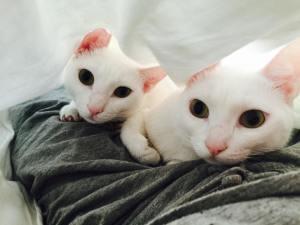 Sanny and Franny