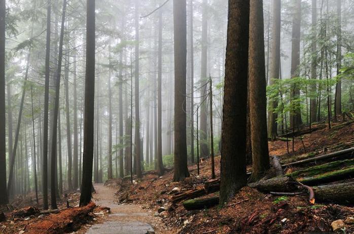 foggy-forest-hiking-trail-wall-mural_1200x630