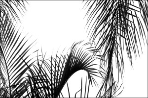 Healing abstract black and white photograph of palm tree leaves silhouetted against sky