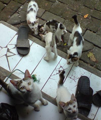 Lima Ekor Kucing Adekecilucuku
