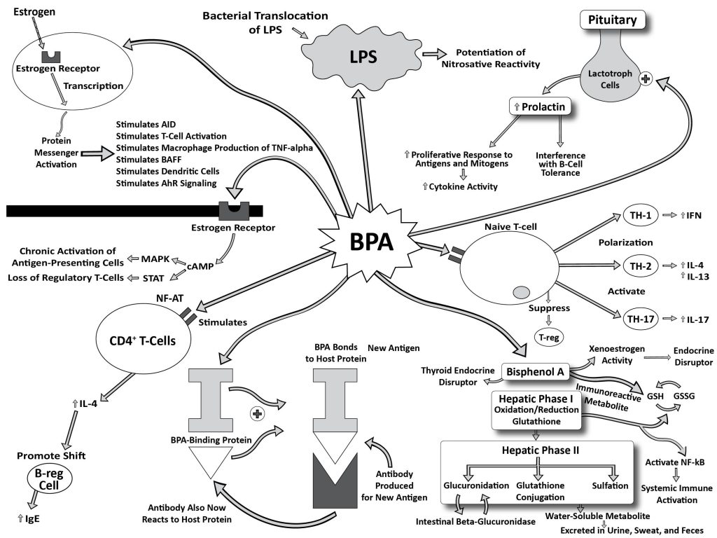 The Effect Of Plastic Products On Autoimmune Disease And