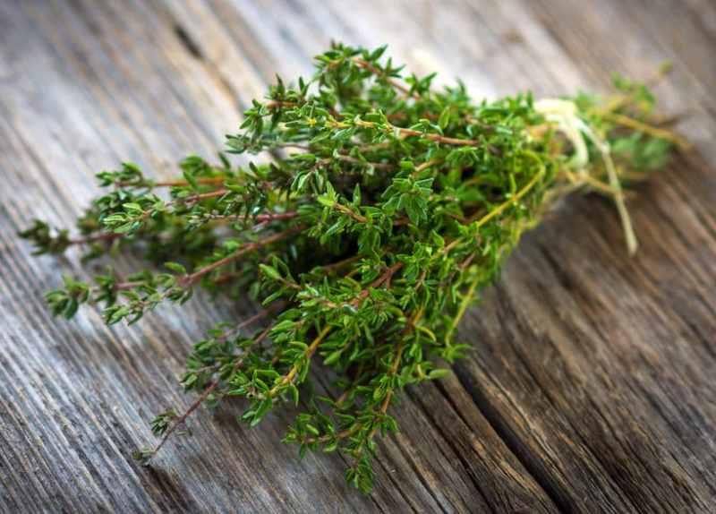 Timian thyme frisk tymian