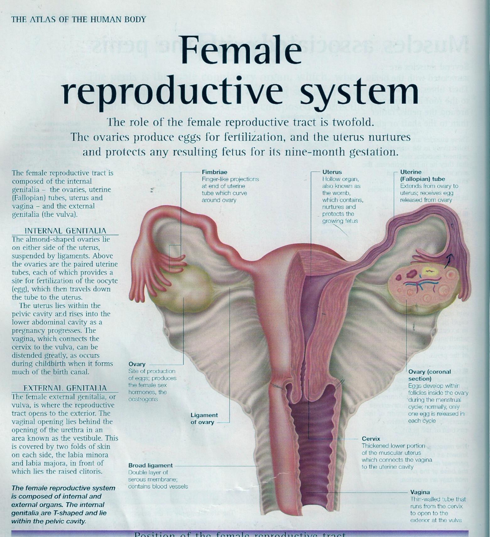 many ladies used to misunderstand the implantation bleeding with