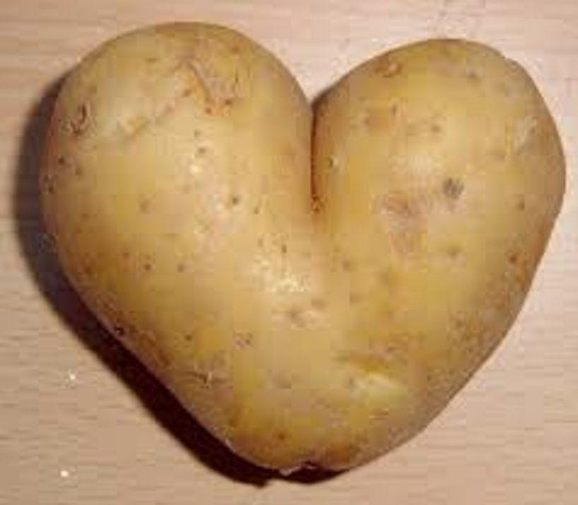 weiße kartoffel