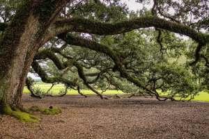 falling tree bramches