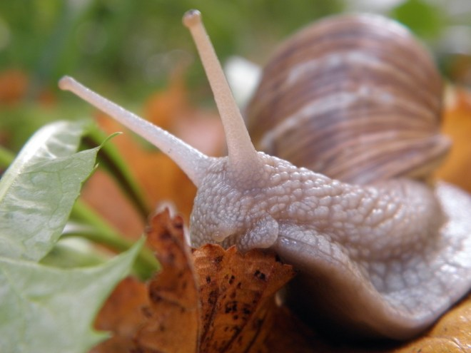 Picture of a beautiful snail