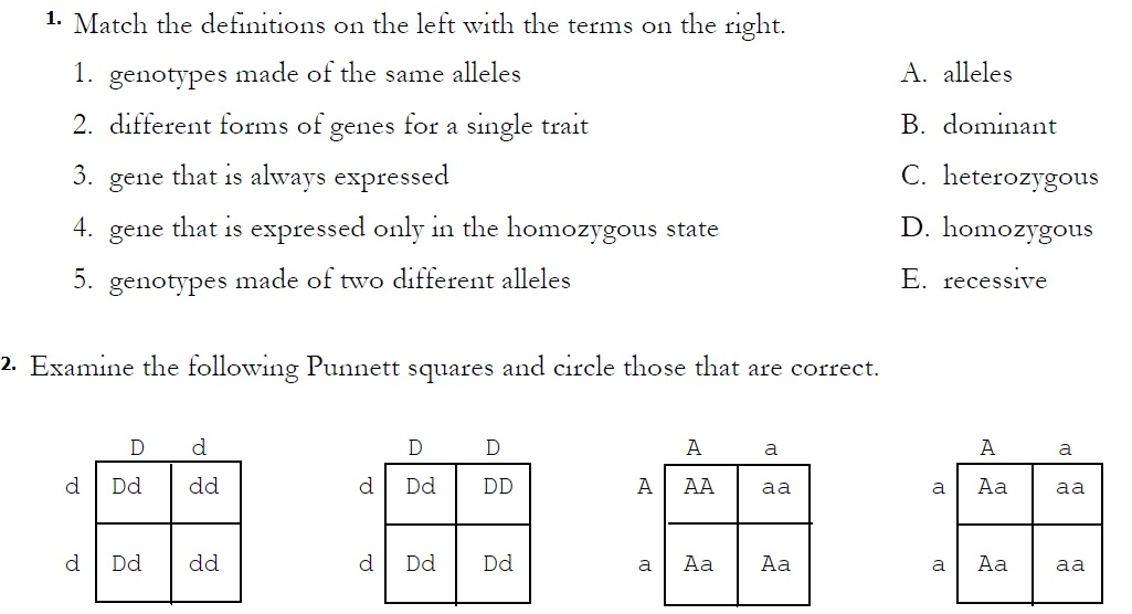 Printables. Monohybrid And Dihybrid Crosses Worksheet
