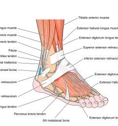 diagram of big toe pain [ 1500 x 1045 Pixel ]