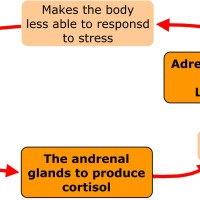 Adrenal Fatigue and its Homeopathic Restore