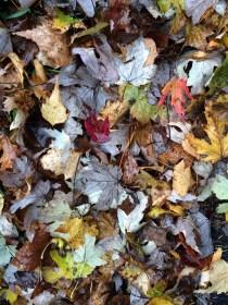 fall-leaves-1-photo