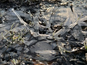 Cracks in frozen puddle with sun reflections