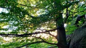 Summer tree and sunset