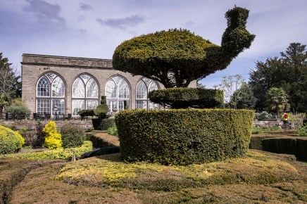 Peacock topiary at Warwick Castle