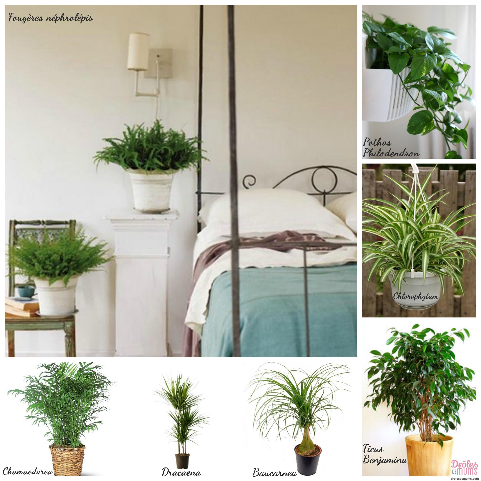 plante verte pour chambre chaise rose vert table avec une plante en pot d or dans la. Black Bedroom Furniture Sets. Home Design Ideas