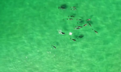 Dolphins and Drone