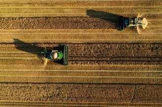 Karl Adami - Harvest III