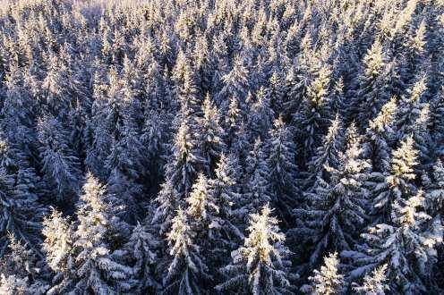 Karl Adami - Winter V