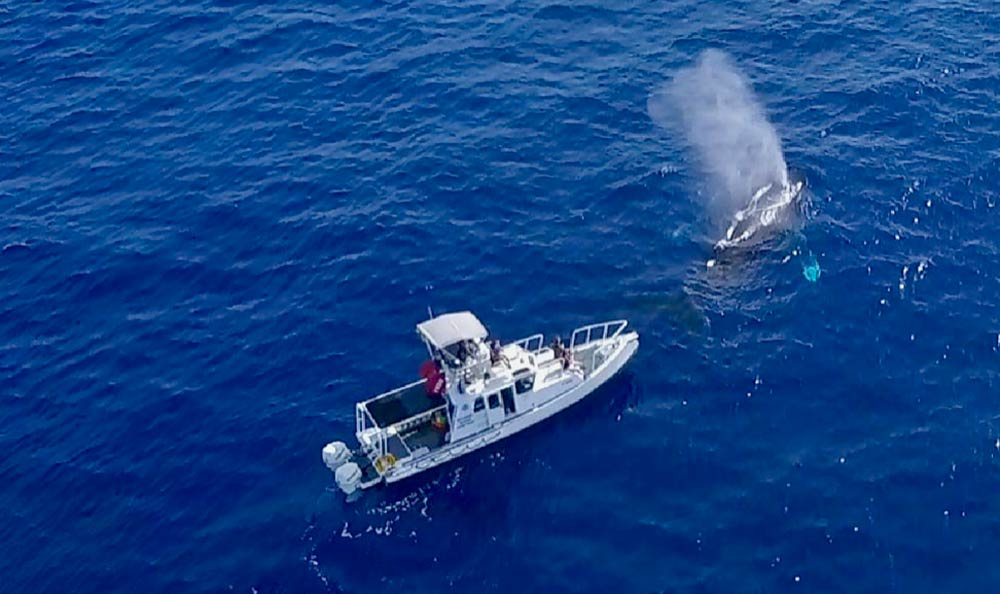 Humpback whale research vessel | Oceans Unmanned