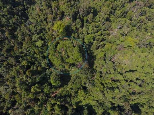 Can you spot the orangutan nests? | Orangutan Nest Watch