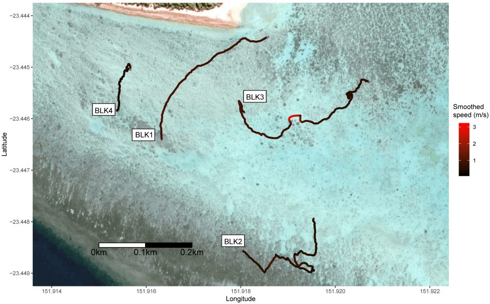 Locally-smoothed Blacktip Reef Shark (Carcharhinus melanopterus) tracks and movement speed recorded at Heron Island reef crest using a UAV. Satellite imagery courtesy of Google.