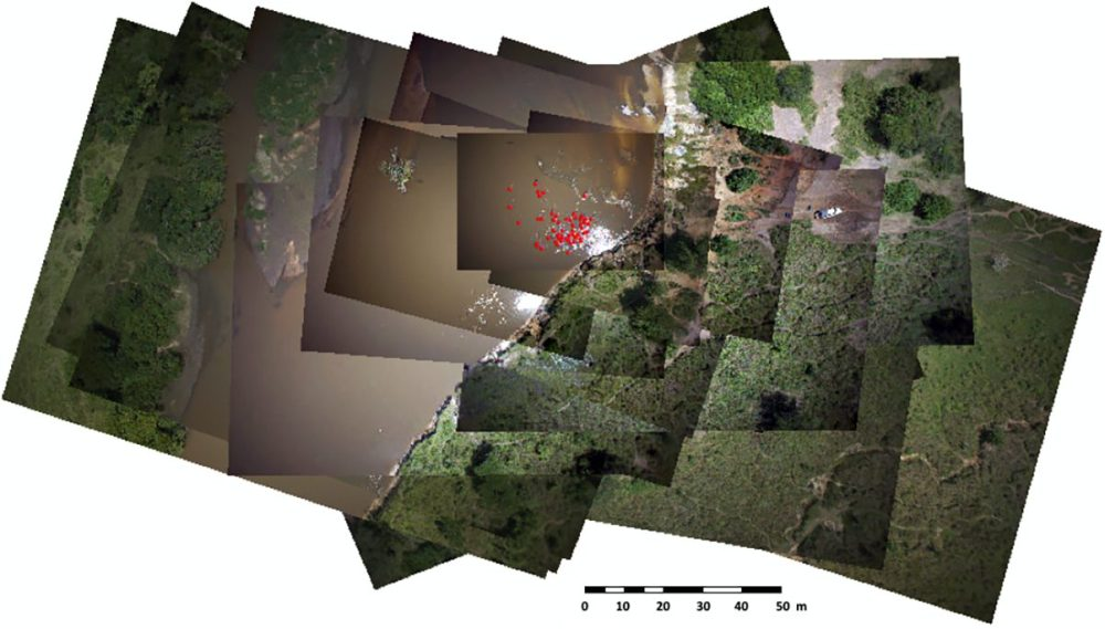 Overlap of 15 geo-referenced images. Red dots are the detected hippopotamuses recorded in the vector layer.
