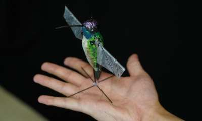 Purdue University researchers are building robotic hummingbirds that learn from computer simulations how to fly like a real hummingbird does. The robot is encased in a decorative shell. Credit Purdue University photo/Jared Pike