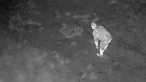 Hunting Burmese pythons in the Floridian Everglades is no easy task. The camouflage of these snakes works so well that they are almost impossible to spot in amid the sawgrass and other swamp vegetation. However, there is a new guy in town that makes spotting pythons much easier and faster and it is a drone outfitted with an infrared thermal camera.