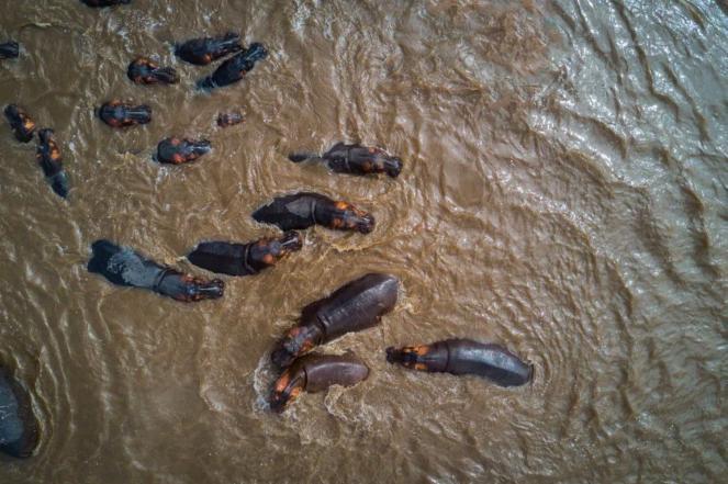 Hippos in Serengeti National Park - yannick68 Donestagram