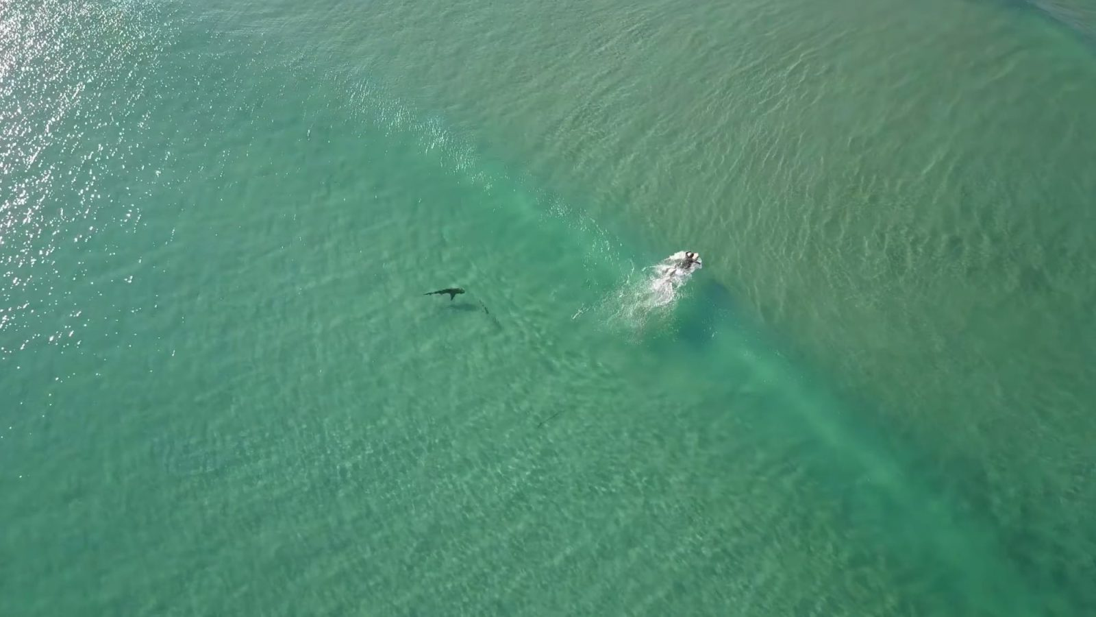 drone footage shows sharks