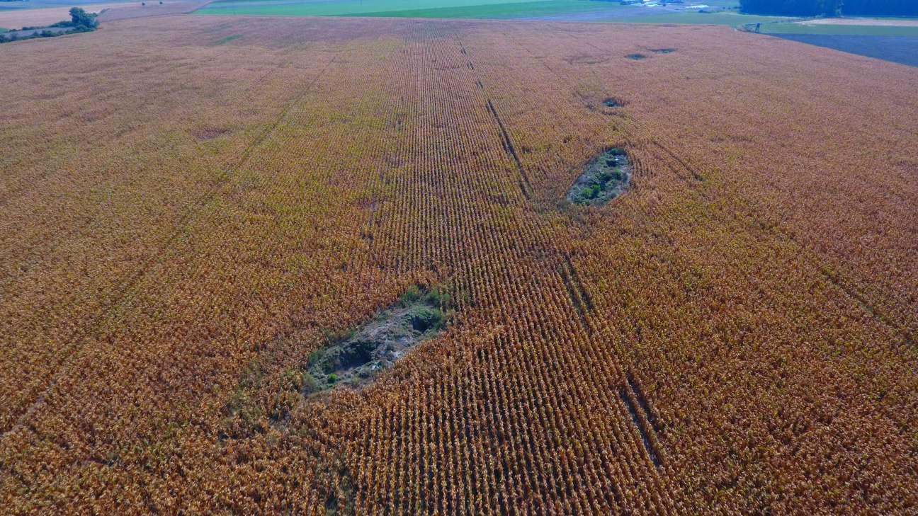 Inspekcja rolna Września